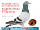 TR20-152022 DİŞİ / BABASI 3. FİNAL 550 KM ANNESİ 17. FİNAL 500 KM KIRKPINAR
