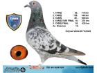TR20-224325 / VANLON YUNUS FİNAL 430 KM 26 . AS KLASMAN 10.