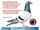 TR20-258670 / ORJ AHMET ÖZEN BABA OGÜN KÖSE GERRİT BOLT ANNESİ K. BOSUA M. ALBRECHT - ŞABLON