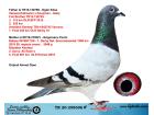 TR20-258696 ERKEK / ORJ AHMET ÖZEN BABASI OGÜN KÖSE ANNESİ G. FLORİN