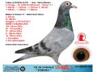 TR20-274036 Dumanlı / Dişi - Anne'den Kardeşi Derby 16 1. As güvervcin 5x5 3. Hız güvercini