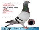 TR20-274037 ERKEK / BABASI GUNTER PRANGE % 100 ANNESİ 2. 300 KM 21. 260 KM