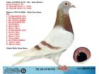 TR20-274075 DİŞİ / BABASI GUNTER PRANGE % 100 ANNESİ 206 !!!