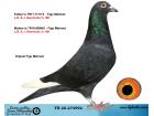 TR20-274992 ERKEK / L. B. & J. GEERINCKX % 100