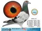 TR21-022127 / ERSIN LALE - 9. FİNAL 477 KM / 9. ACE GÜVERCİN