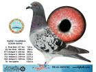 TR21-039734 / HURSIT YILDIRIM & OZKAN SAVAS - 8. FİNAL 477 KM / 78. ACE GÜVERCİN