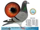 TR21-044424 / CENK KOSE - 2. FİNAL 477 KM / 7. ACE GÜVERCİN