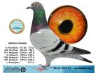 TR21-096101 / MEHMDUH SARANLI - 15. FİNAL 477 KM
