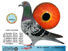 TR21-100771 / FERIT CAGLAYAN - 14. FİNAL 477 KM