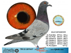 TR21-207637 / SALIH VATANSEVER - 10. ACE PİGEON 6X6 - 49. FİNAL 477 KM