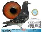 TR21-230228 / ISMAIL FIRTINA & UGUR GUNEY & BEKCI BABA - 10. FİNAL 477 KM