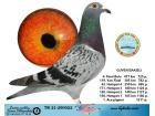 TR21-290022 / GUVEN BAKISLI - 4. FİNAL 477 KM / 1. ACE GÜVERCİN