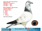 TR21-303071 ERKEK / BABASNIN BABADAN KARDEŞLERİ TEK KUMESLERDE BASARILI