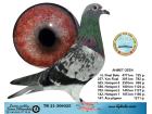 TR21-306025 / AHMET OZEN - 16. FİNAL 477 KM