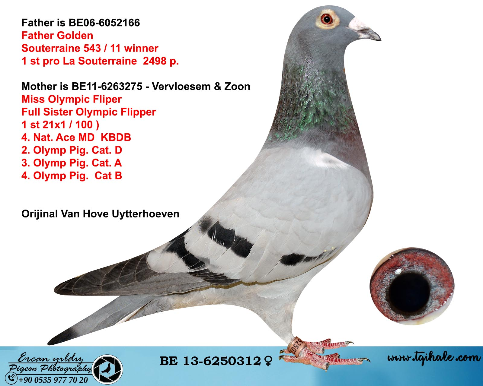BE13-6250312 DİŞİ / ORJ VAN HOVE UYTTERHOEVEN