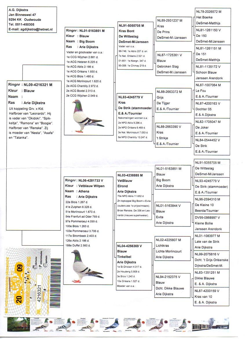 BE16-4258303 ERKEK / ARİE DIJKSTRA % 100 BABADAN KARDES 6. FİNAL , 6. FİNAL , 9. FİNAL