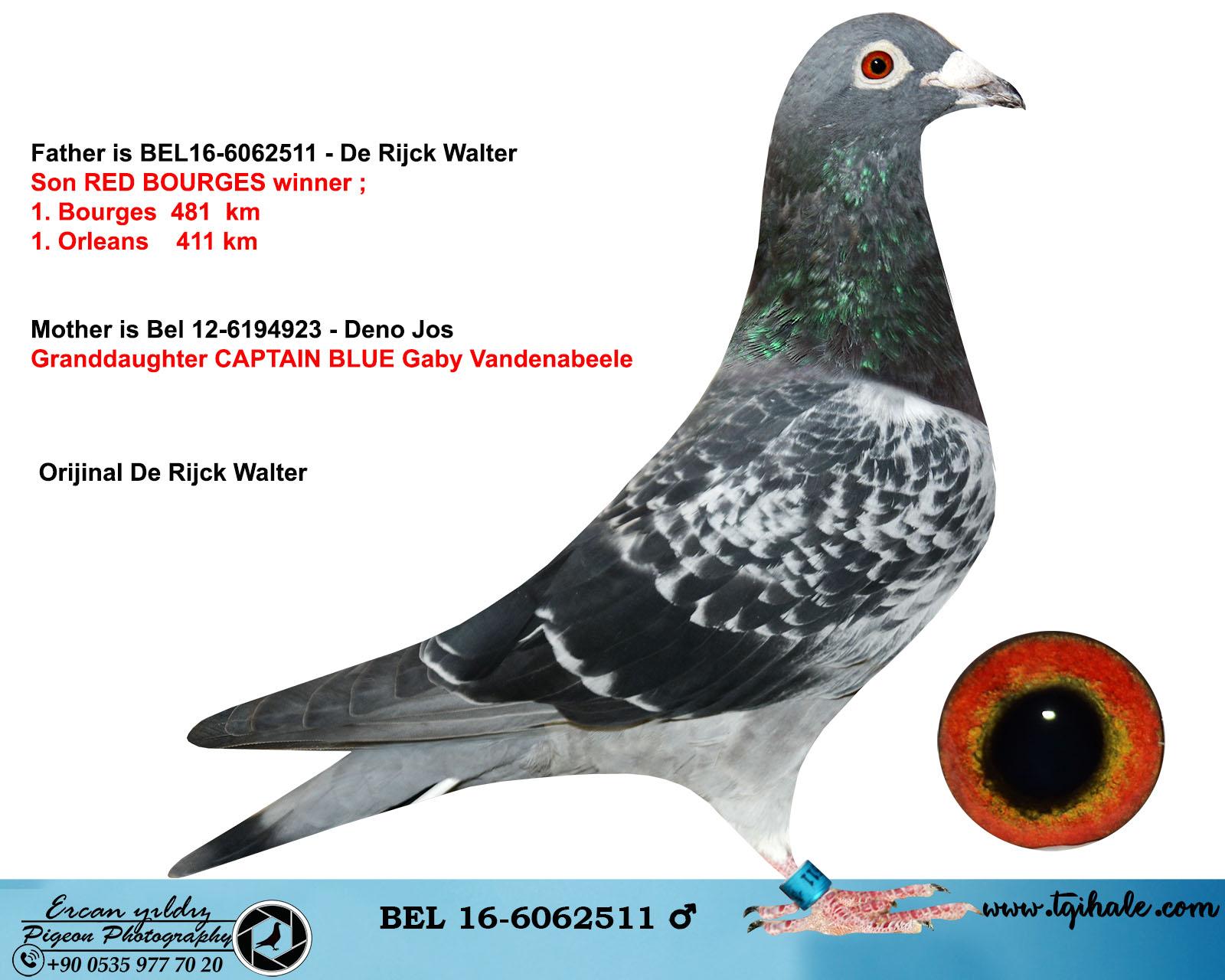 BEL16-6062511 ERKEK / ORİJİNAL DE RİJCK WALTER