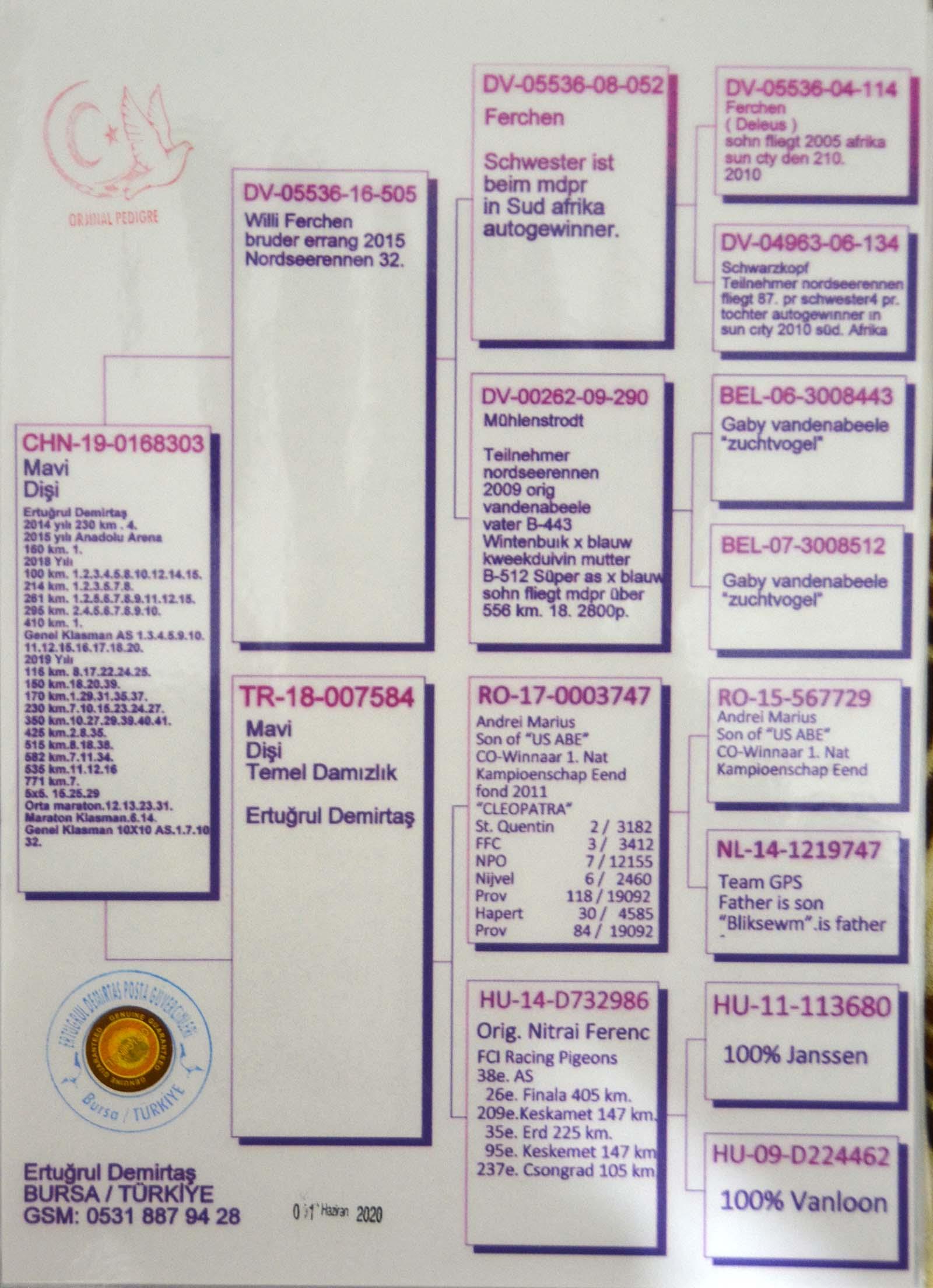 CHN19-0168303 DİŞİ / G. VANDENABEELE - DELEUS - A.DIJKSTRA - JANSSEN - V. LOON