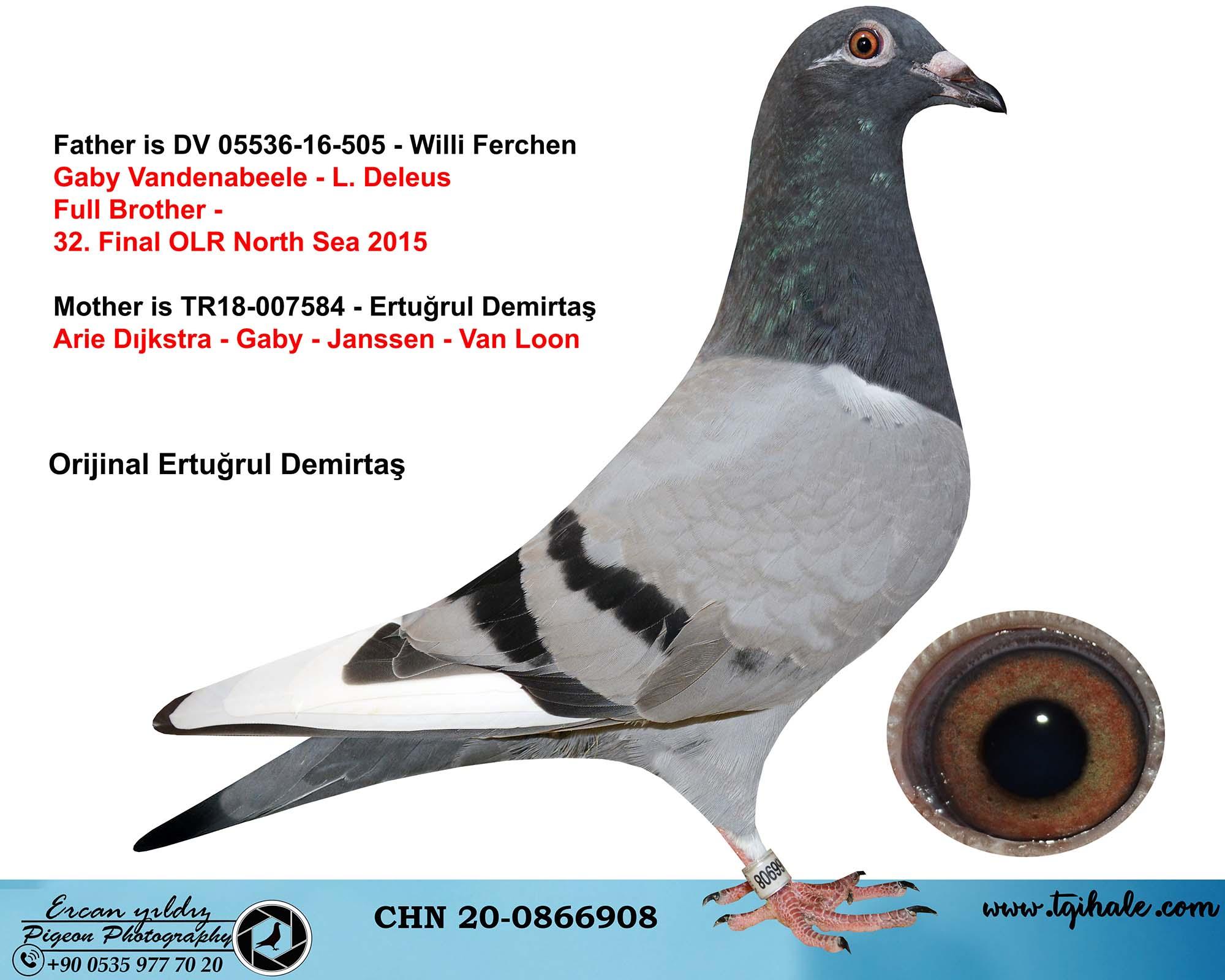 CHN20-0866908  / G. VANDENABEELE - DELEUS - A. DIJSTRA - JANSSEN - V. LOON