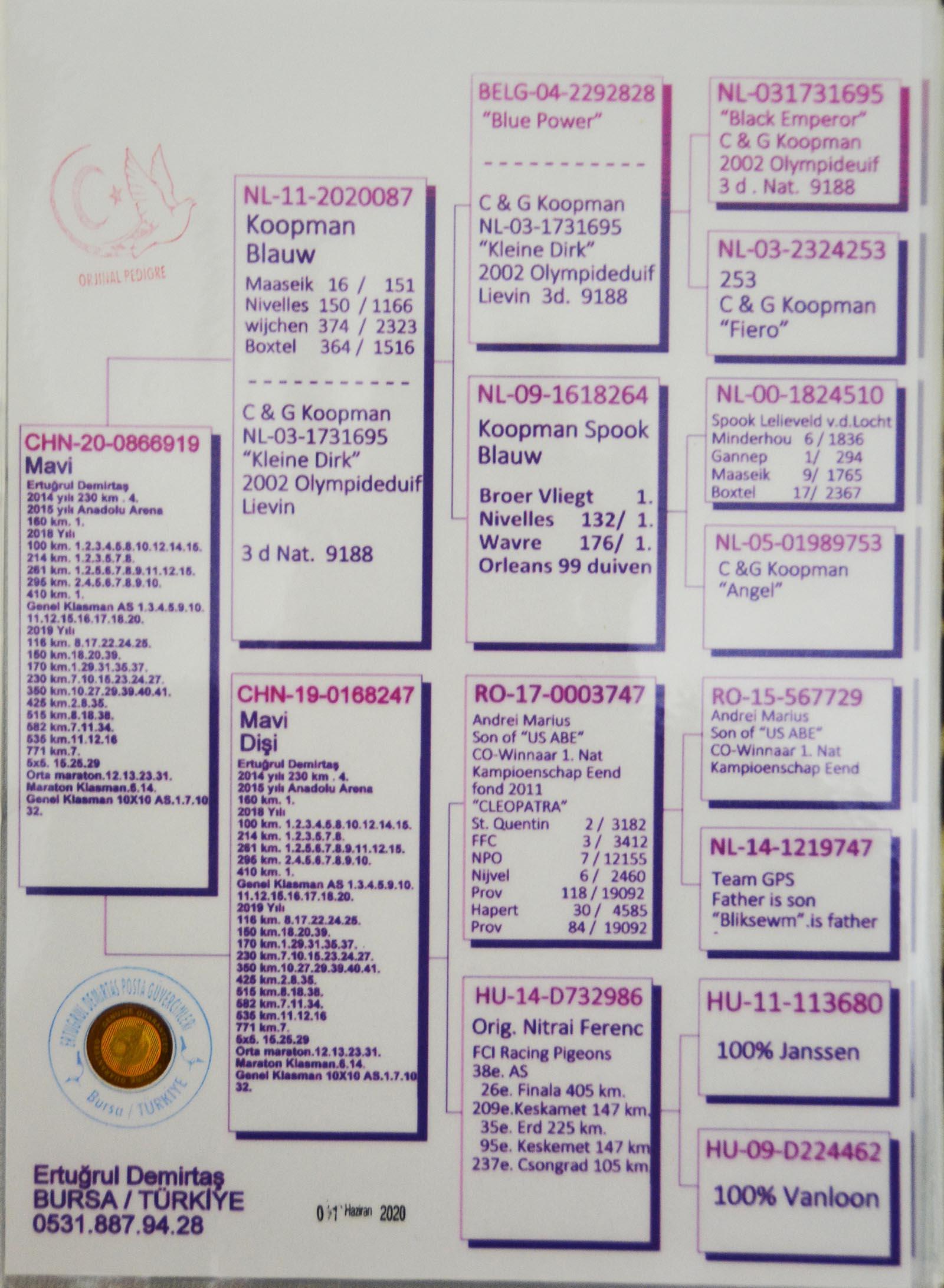 CHN20-0866919 - KOOPMAN - GABY - JANSSEN - V. LOON