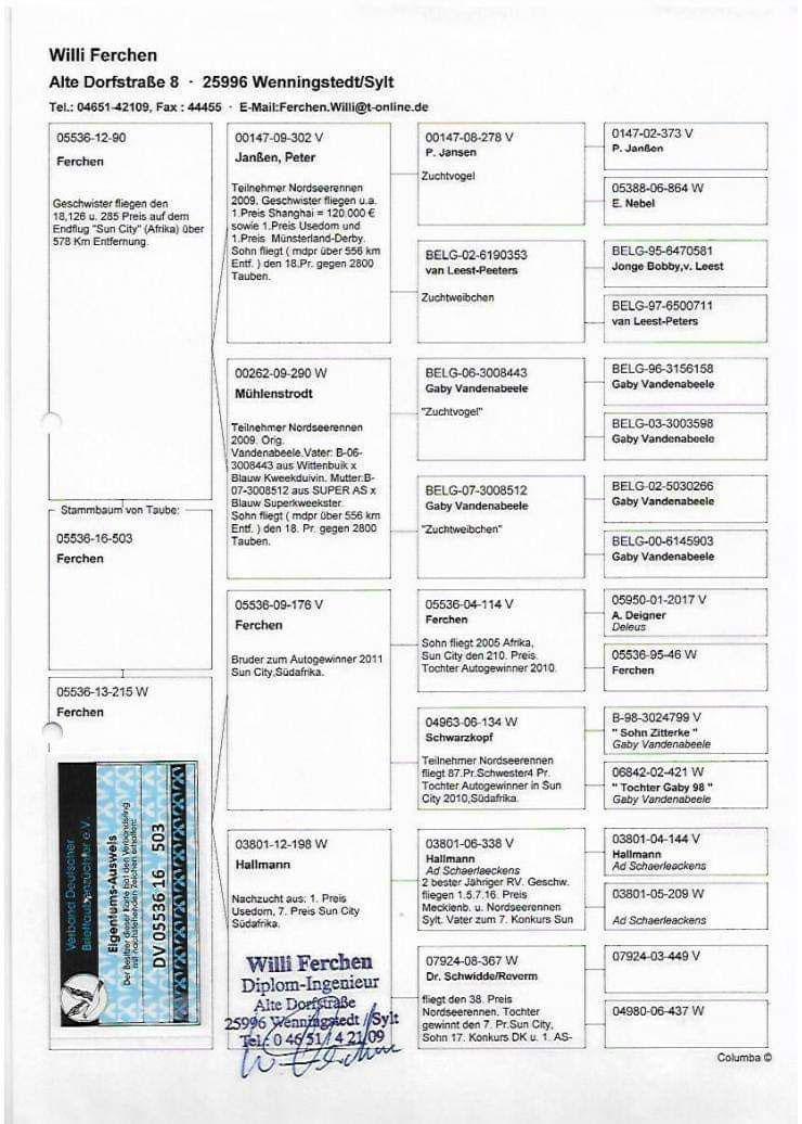 CHN20-0867313 DİŞİ / GABY VANDENABEELE - A. SCHAERLEACKENS - HOUBEN
