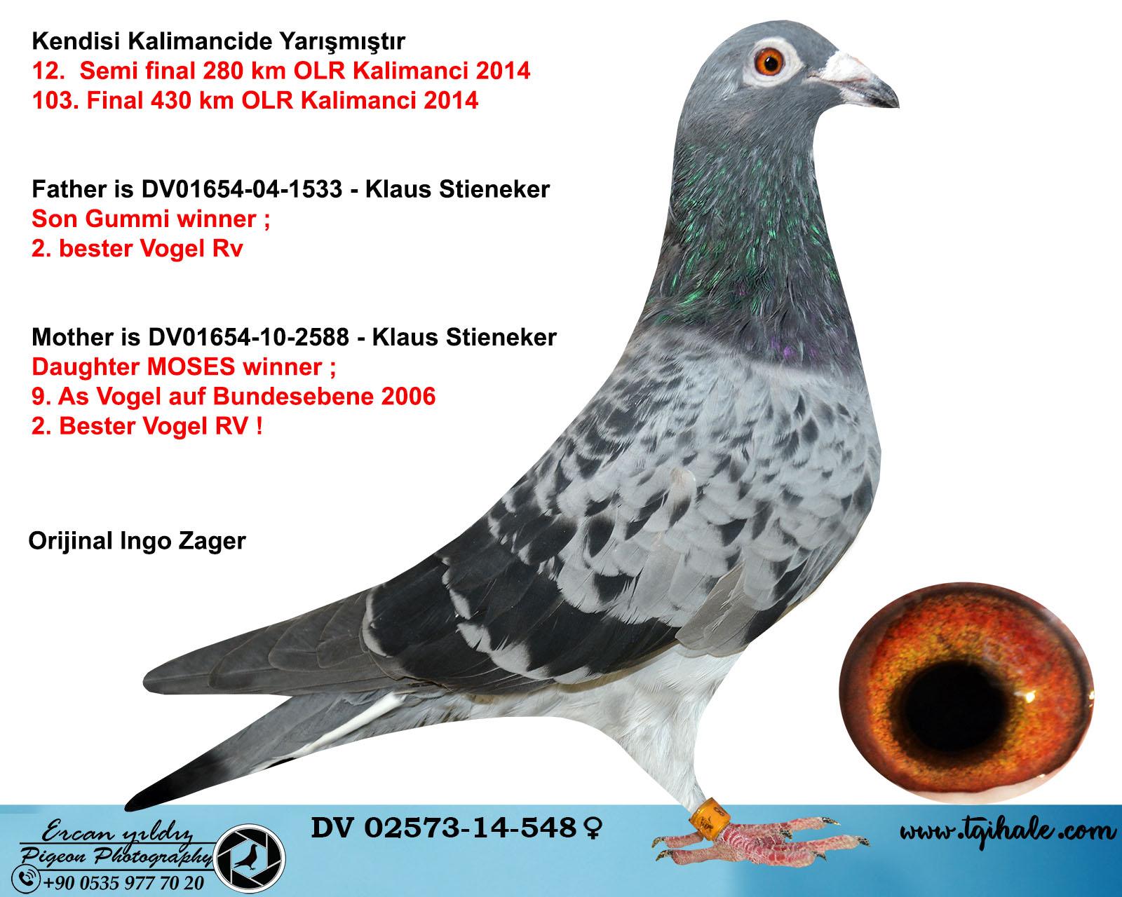 DV02573-14-548 DİŞİ / KUŞUN KENDİSİ KALİMANCİDE YARIŞMIŞTIR .