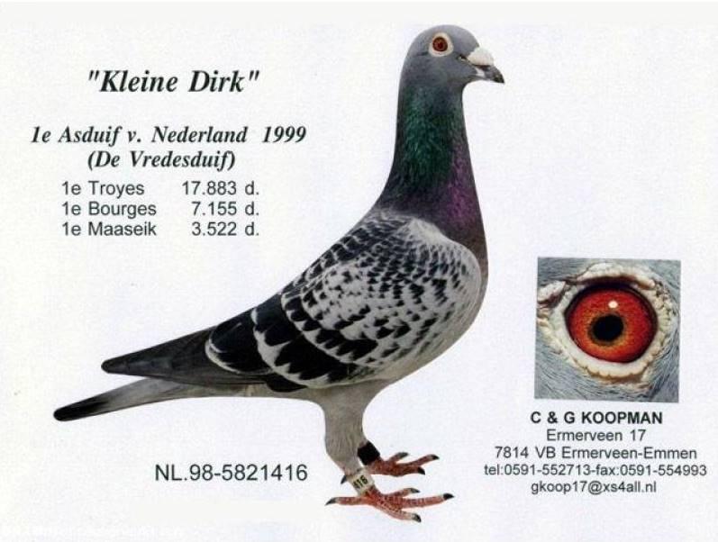 DV0516-16-927 ERKEK / G. & C. KOOPMAN % 100