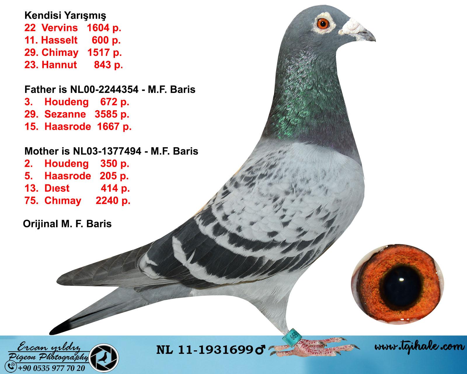 NL11-1931699 ERKEK / KENDİSİ YARIŞMIŞ FİKRET BARIŞ ÖZEL SOYLARINDAN
