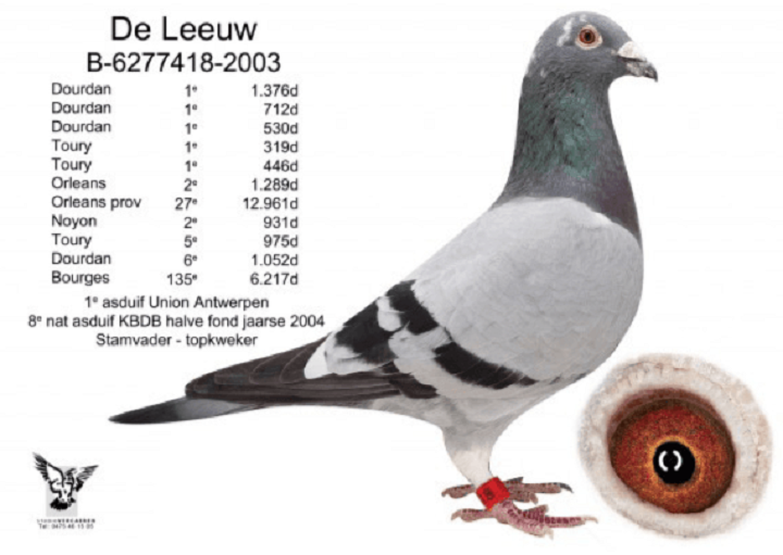 NL15-1347981 DİŞİ / BABA WIITEKOP SYLVESTER TORUNU ANNE MARCEL WOUTERS EXTREEM, LEEUW