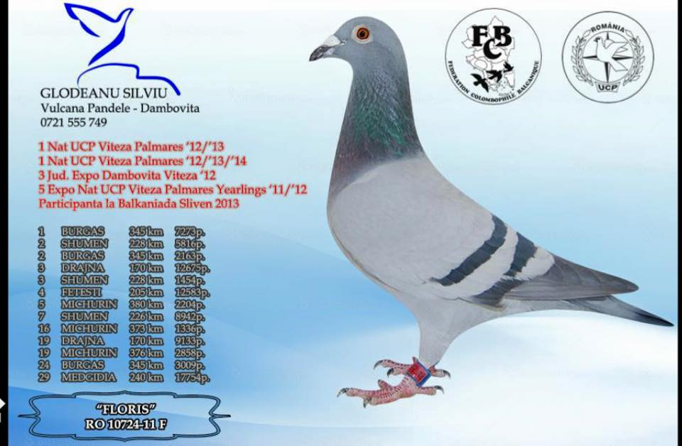 RO-14-1112386  FLORİS KIZI DİŞİ