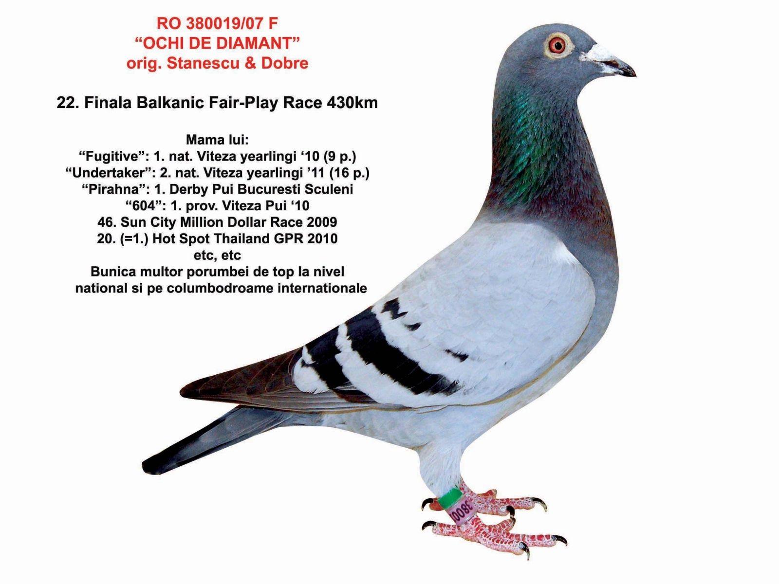 RO13-0973620 ERKEK /  ORJ BIBI STEFANESCU BABASI 1. SEMI FINAL ANNESI 22. BFP RACE