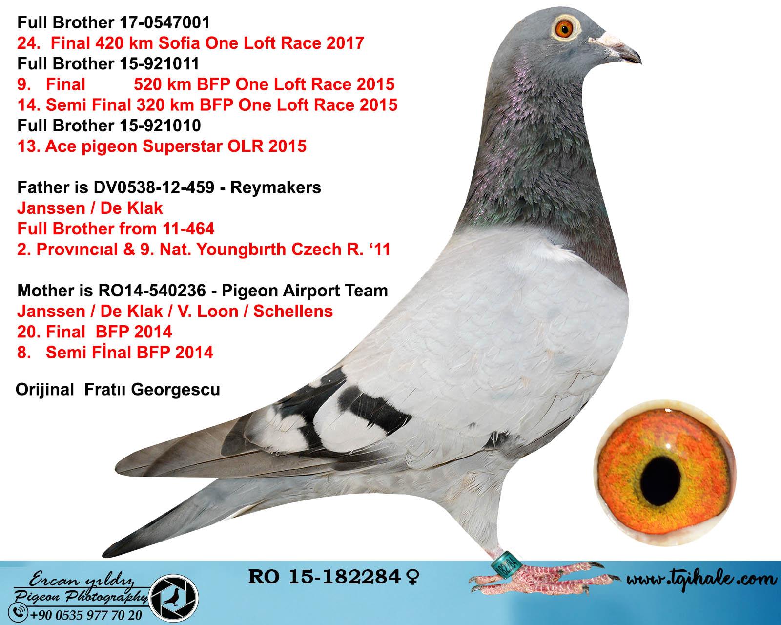 RO15-182284 DİŞİ / KARDEŞİ 24. FİNAL 420 KM SOFİA OLR / KARDESI 9. FİNAL BFP 520 KM