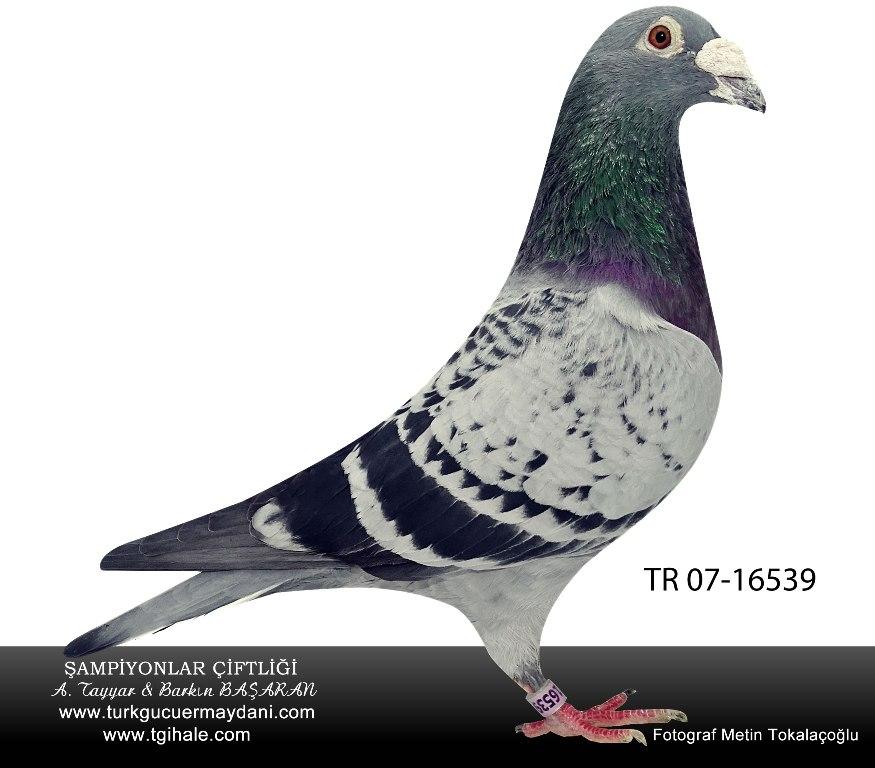 TR-07-16539  2-/As Türkgücüermeydanı erkek JANSEN