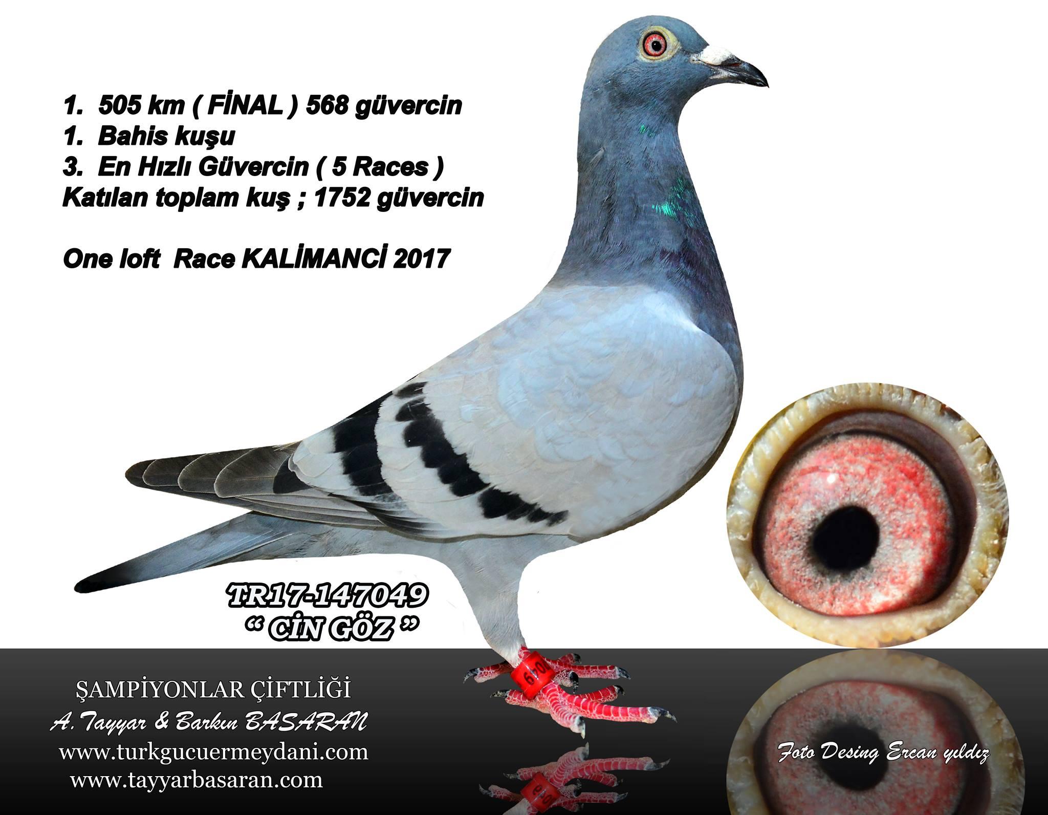 TR-18-206758 DİŞİ