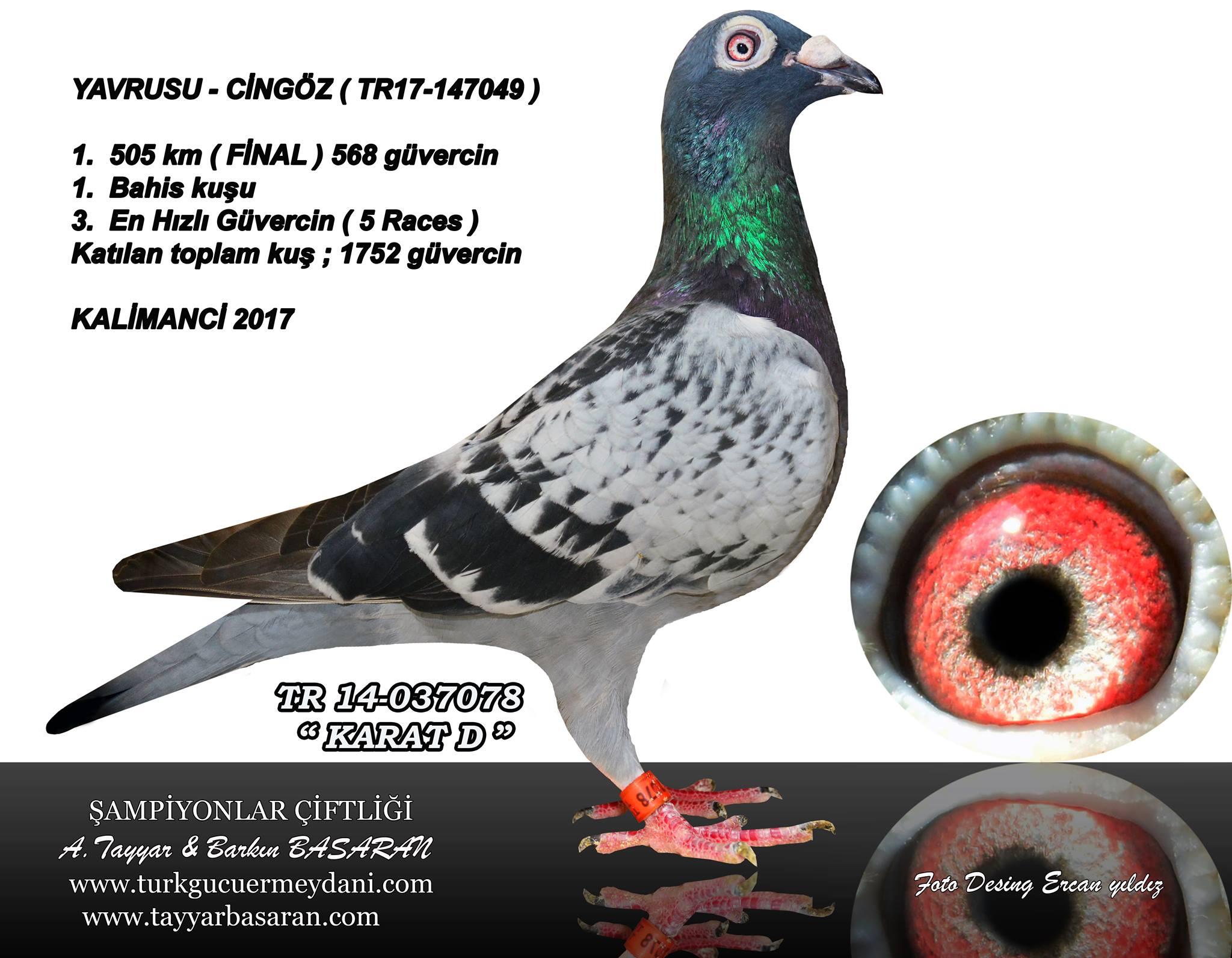 TR-18-206929 1.inci Kalimanci erkek kardşi 2017