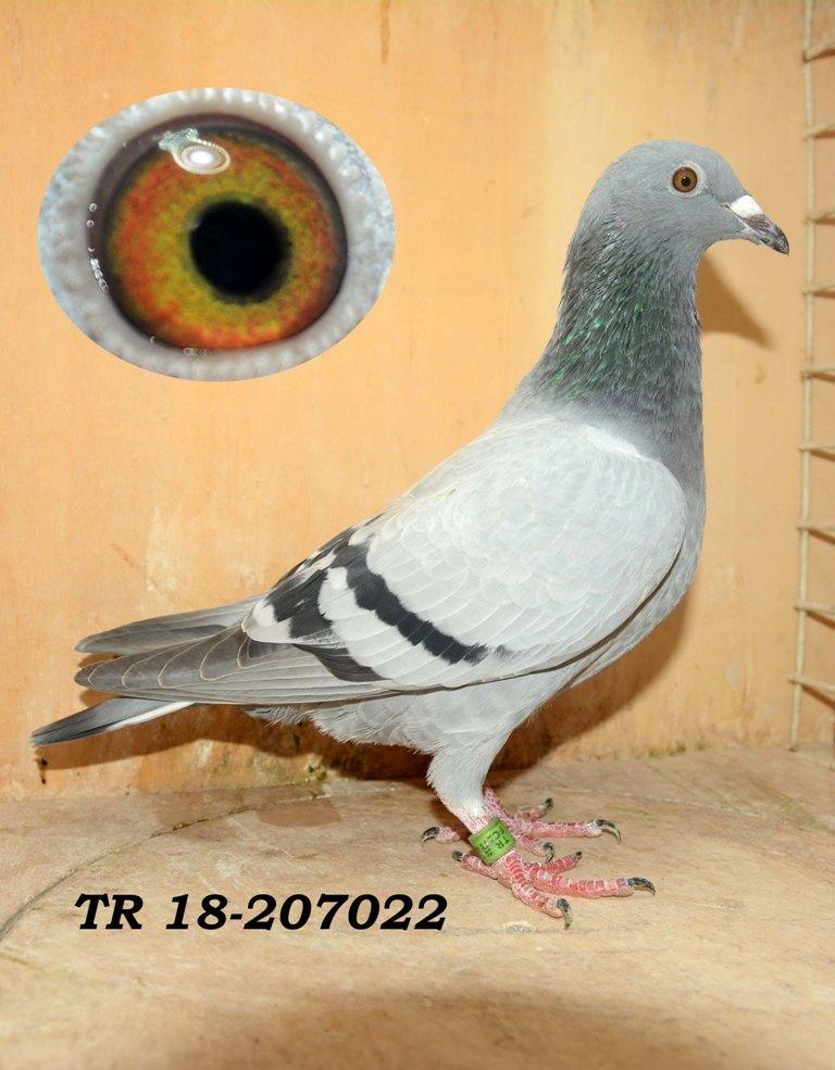 TR-18-207022 ERKEK ortak kümes için ideal