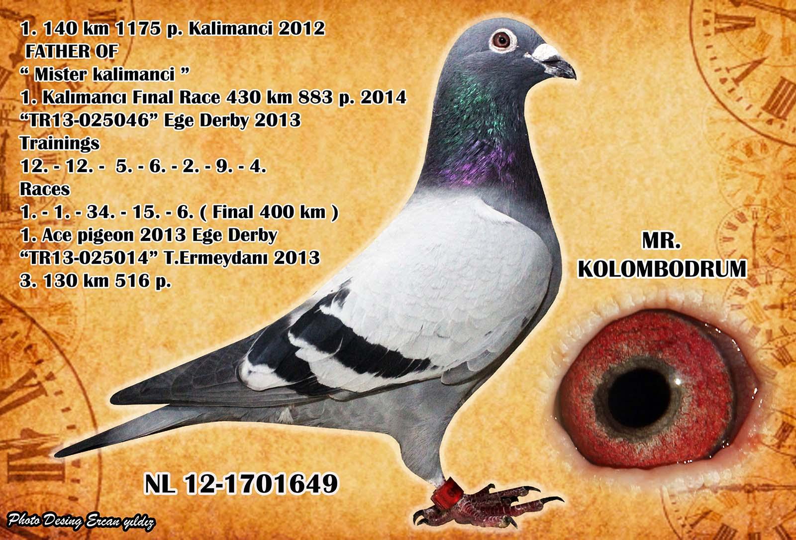 TR15-130764 ERKEK /  BROTHER MISTER KALIMANCI TORUNU NIRWANA TORUNU DERBY 16 AS 1