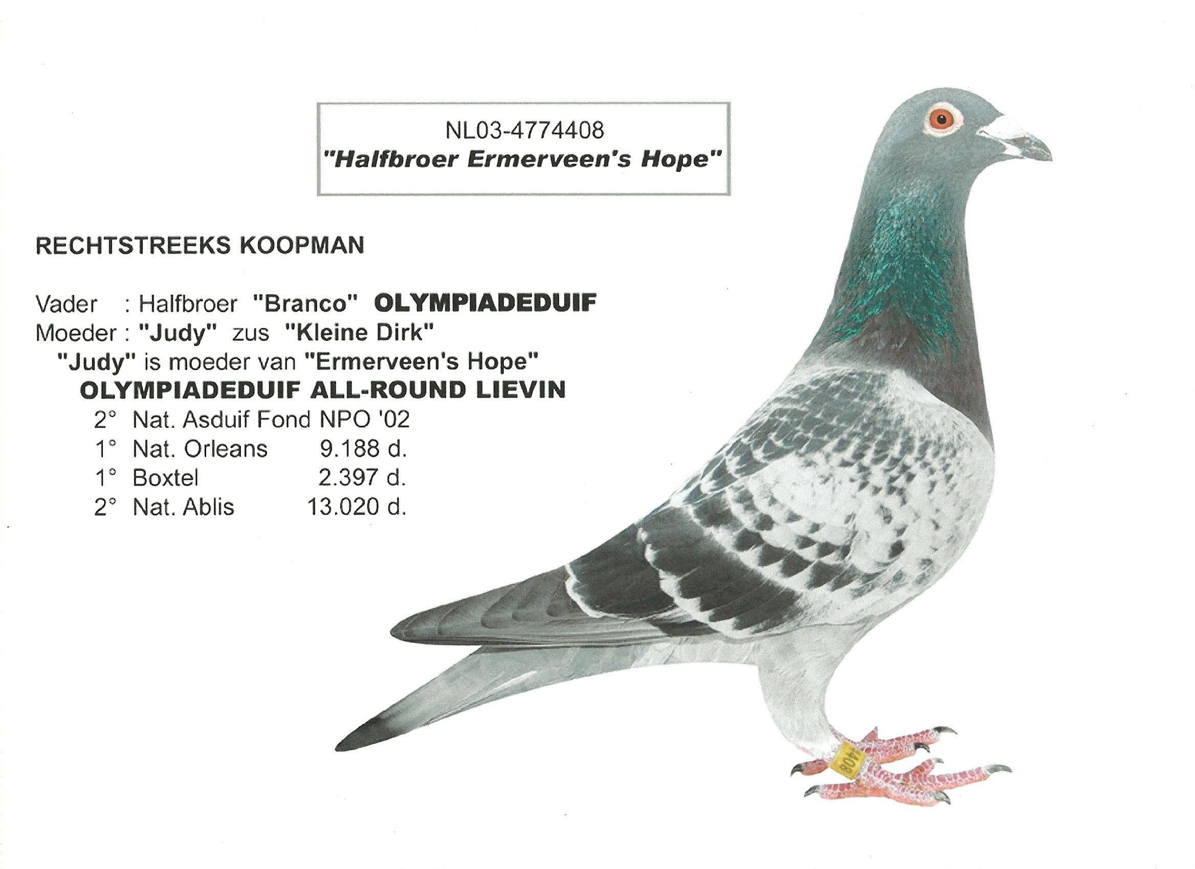 TR16-147657 DİŞİ / BABASI KOOPMAN - R. WALTER- BOSUA ANNE BOSUA - REYNAERT