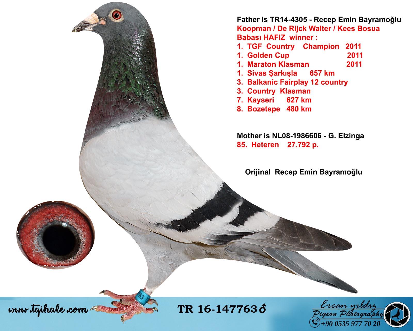 TR16-147763 ERKEK / BABASI KOOPMAN - R. WALTER - K. BOSUA ANNESİ 85. HETEREN
