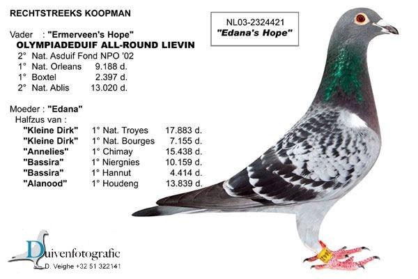 TR16-149265 ERKEK / BABASI KOOPMAN % 100 ANNESI R. WALTER -REYNAERT- K BOSUA