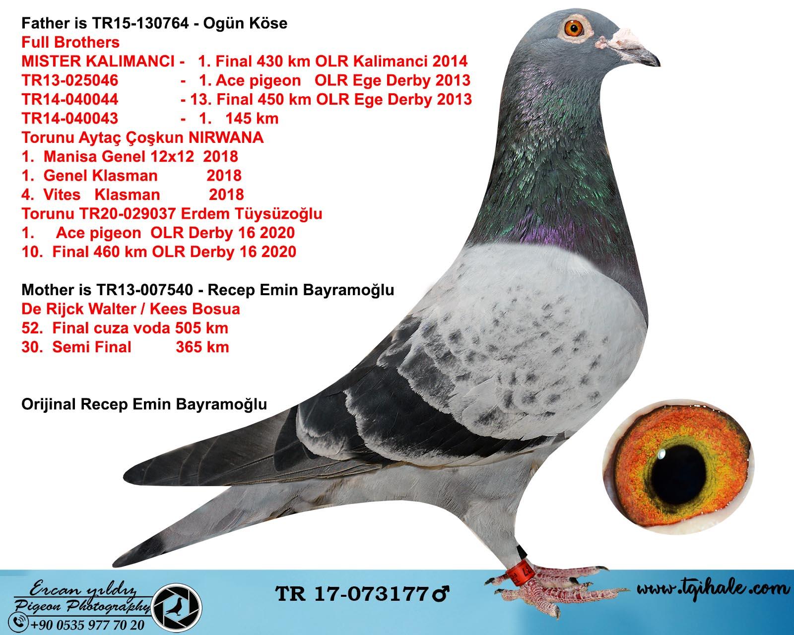 TR17-073177 ERKEK / BABASI BROTHER MISTER KALIMANCİ ANNESİ R. WALTER - K. BOSUA