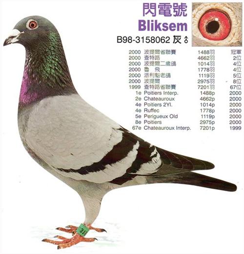 TR17-179163 ERKEK / GABY VANDENABEELE % 100