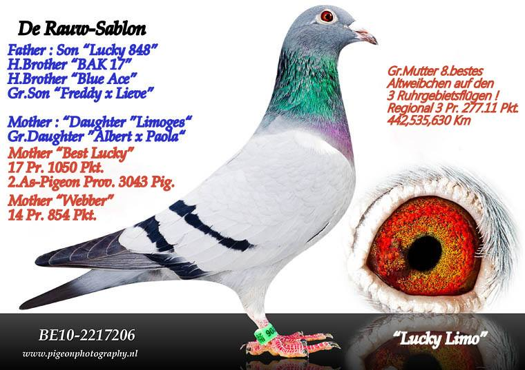 TR18-138407 DİŞİ / DE RAUW ŞABLON- GABY -KOOPMAN ANNEDEN KARDES 1.   478 KM