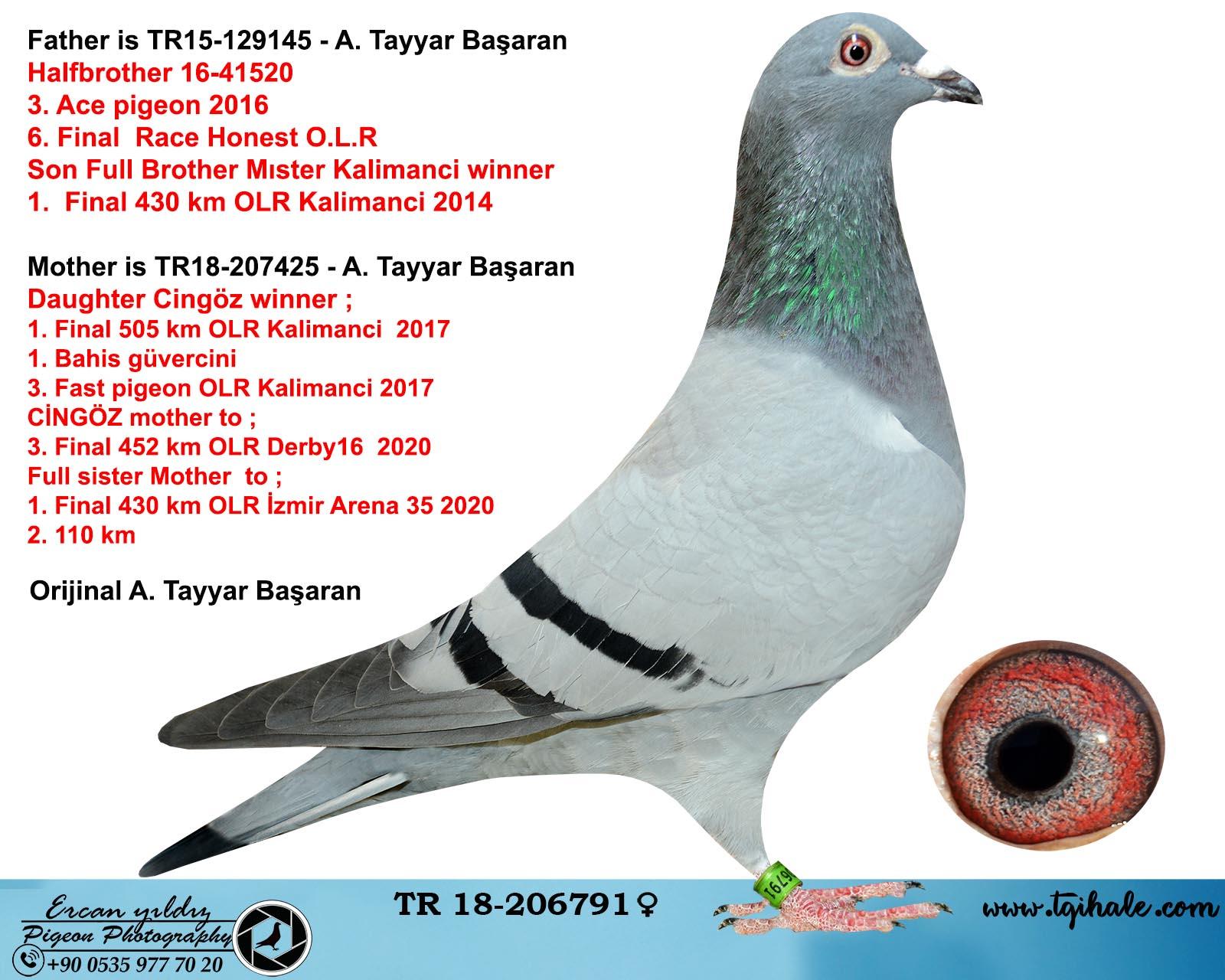 TR18-206791 DİŞİ / BABASNIN YARI KARDEŞİ 3 . AS GÜV. ANNESİ CİNGÖZ KIZI