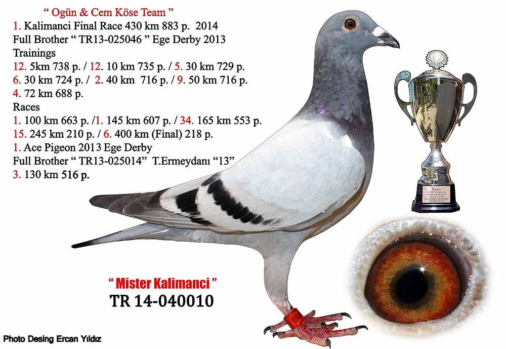 TR19-059141 DİŞİ / BABASI  1   .625 KM-    2.  292 KM   JAN ARDEN -JOS -E. DENYS