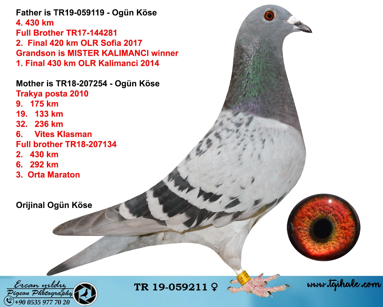 TR19-059211 DİŞİ / BABASI 4.  430 KM  FULL BROTHER MISTER KALIMACI