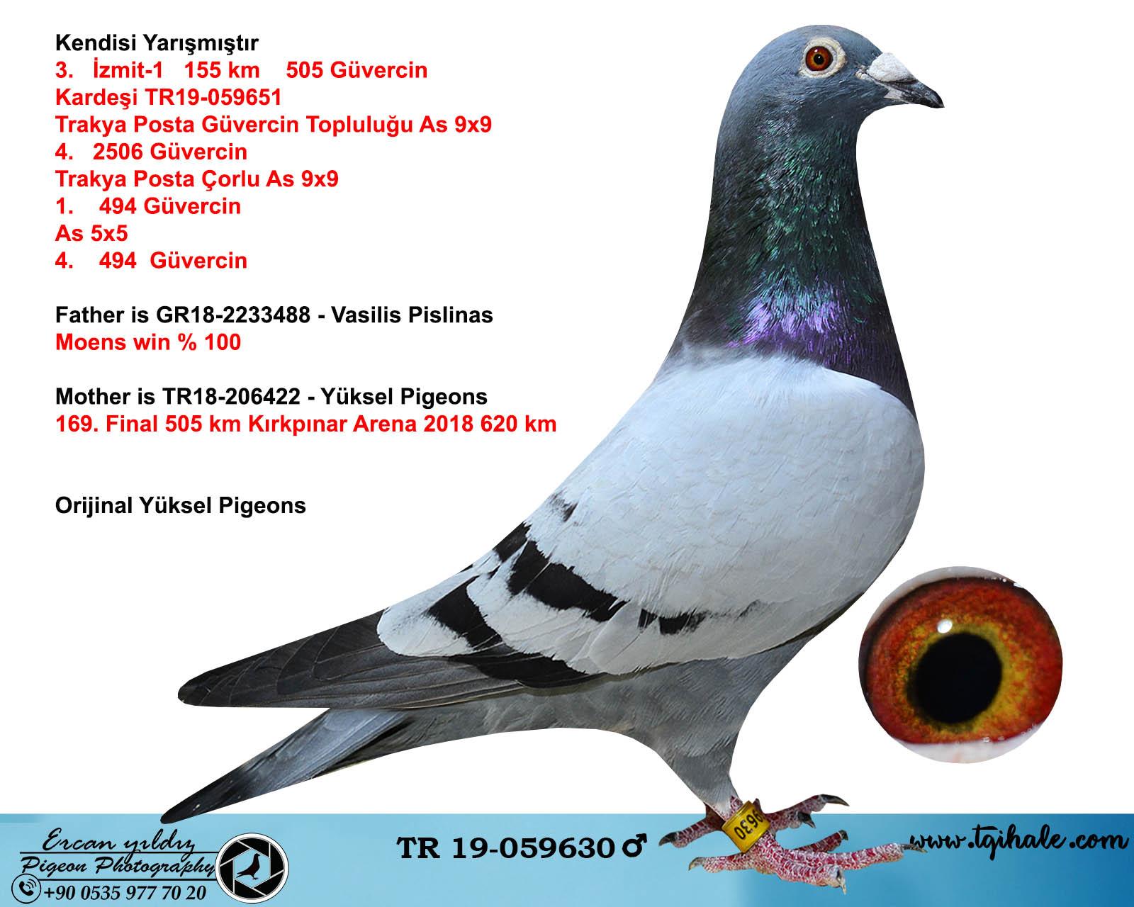 TR19-059630 ERKEK / KENDİSİ YARIŞMIŞTIR -  3. İZMİT 155 KM 505 GÜVERCİN