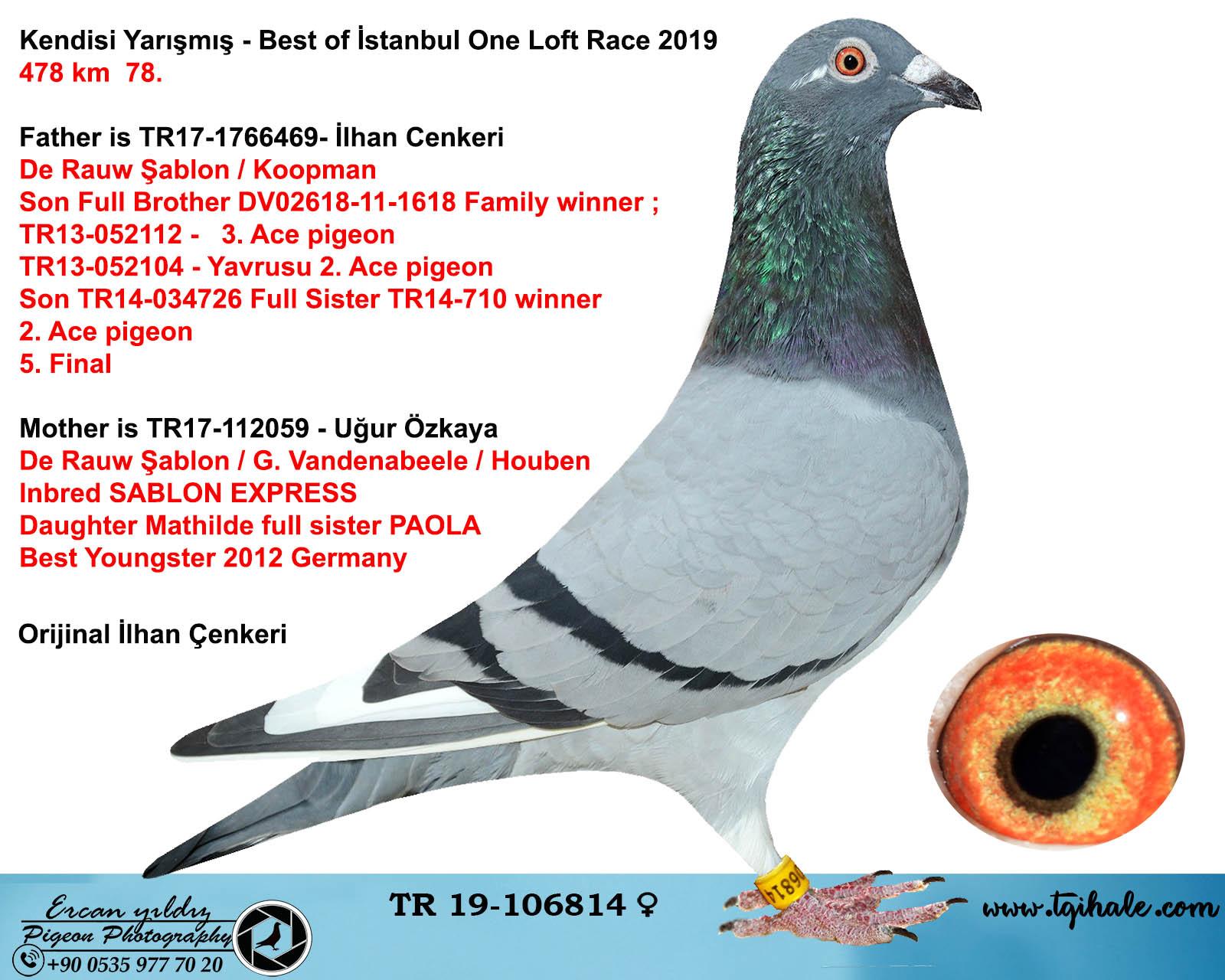 TR19-106814 DİŞİ / KENDİSİ BEST OF İSTANBUL OLR 2019  FİNAL 78.