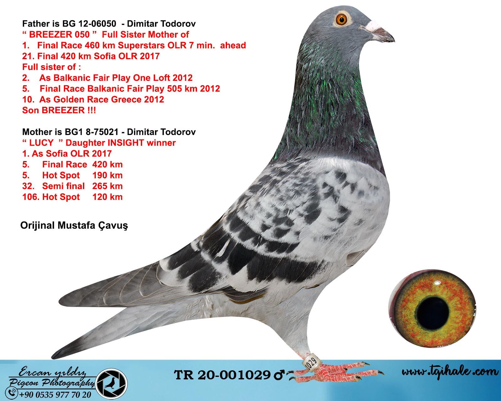 TR20-001029 ERKEK  / BABASI BREEZER OĞLU ANNESİ INSIGHT KIZI DIMITAR TODOROV % 100