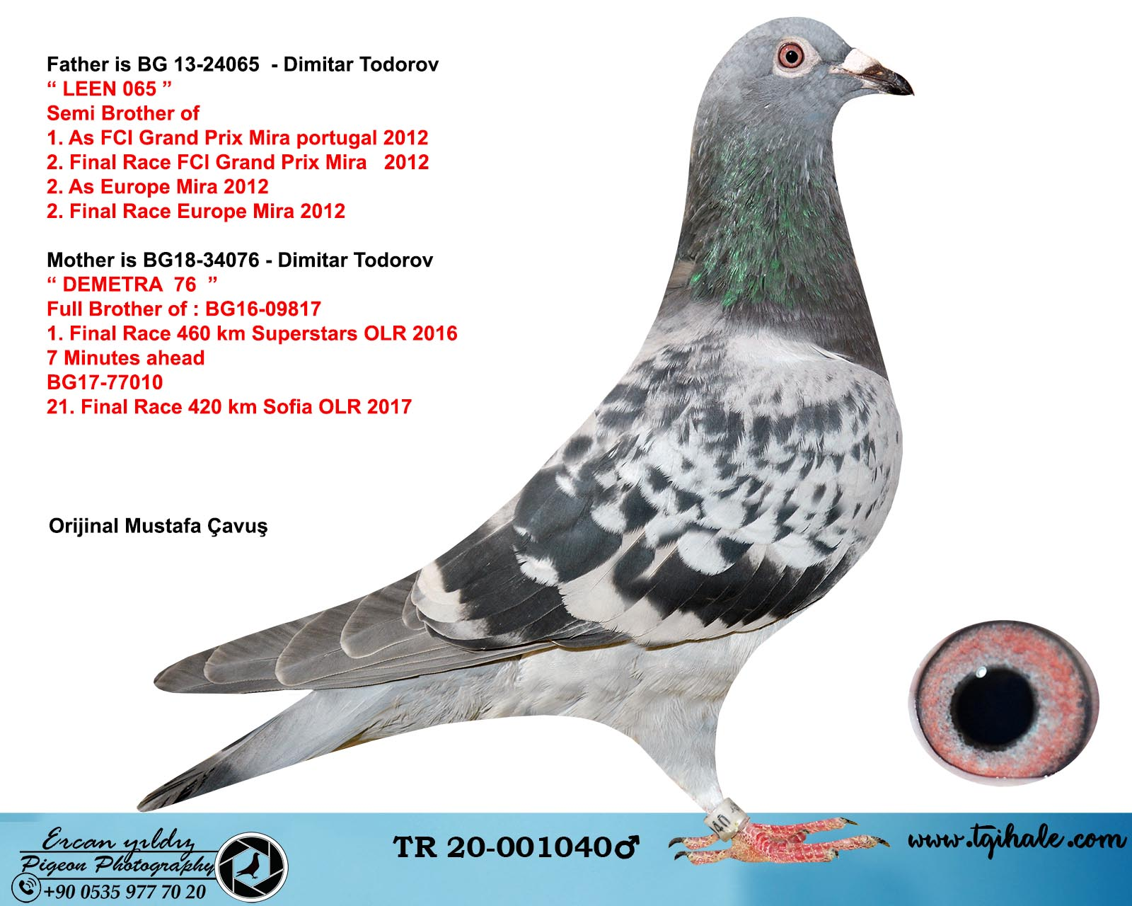 TR20-001040 ERKEK / BABASI LEEN 739 OGLU ANNESI 1. FİNAL 460 SUPERSTAR DIMITAR TODOROV % 100